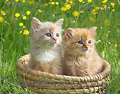 Marek, ANIMALS, REALISTISCHE TIERE, ANIMALES REALISTICOS, cats, photos+++++,PLMP2565,#a#