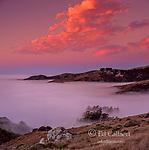 Dawn above Muir Woods National Monument, Mount Tamalpais State Park, Marin County, California