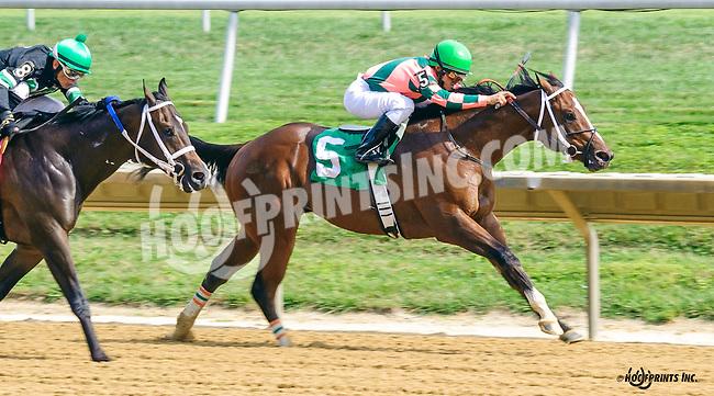 Indian Lover winning at Delaware Park on 9/5/16