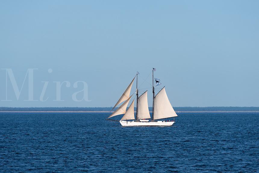 The The Black Dog schooner Alabama at full sail, Nantucket Sound, Martha's Vineyard, USA, Massachusetts, USA