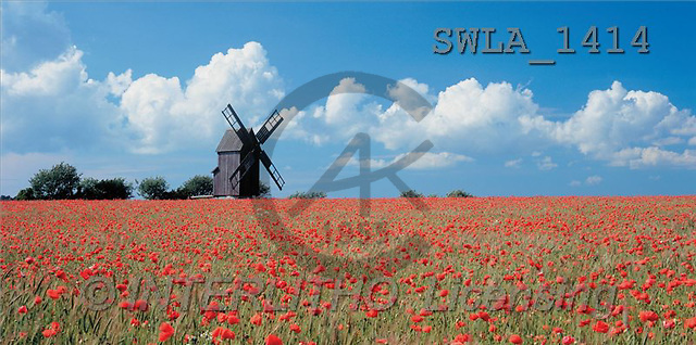 Carl, LANDSCAPES, panoramic, photos(SWLA1414,#L#)
