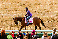 LOUISVILLE,KNY - MAY 03: Tequilita, Morning works for Kentucky Derby & Kentucky Oaks at Churchill Downs, Louisville, Kentucky. (Photo by Sue Kawczynski/Eclipse Sportswire/Getty Images)