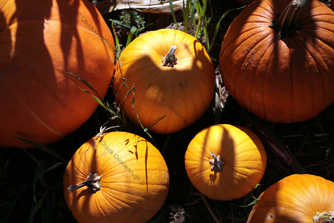 Group of 6 colorful pumpkins together.
