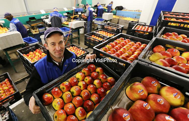 Foto: VidiPhoto<br /> <br /> OOSTERHOUT - Fruitteler Menzo Tijssen uit Oosterhout in de Betuwe in zijn bedrijf tijdens het sorteren van appels.