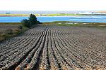 CANADA: PRINCE EDWARD ISLAND.  Potato growing.