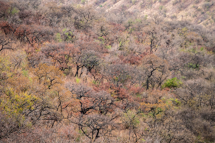 The dry season in the upper slopes of the Omo Valley produces a subtle color contrast in the scrub brush.