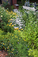 Daisies of yellow and white color theme in garden with bench, cottage garden lush flowers, Coreopsis, Ranunculus, Leucanthemum, herbs, ferns, bicycle, rustic charm, overflowing and rambling design
