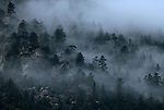 Fog moves through the trees near Fay Luther Trailhead, south of Gardnerville, Nev., on Tuesday, Jan. 9, 2018. <br />
