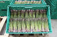 Asparagus - Lincolnshire, June