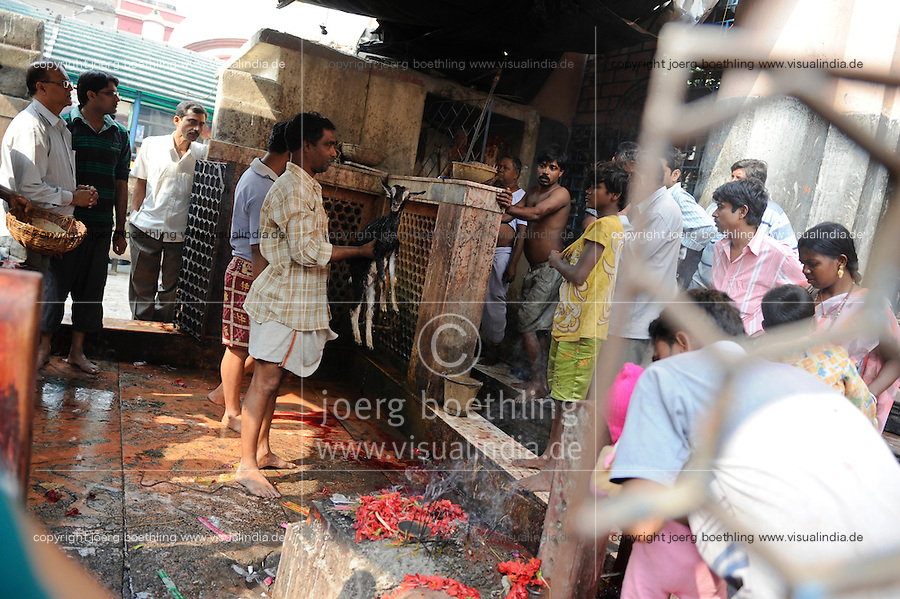 "Asien Suedasien Indien Westbengalen Megacity Kalkutta, Hindutempel fuer die Gottheit Kali, hier werden Ziegenopfer fuer die Goettin gekoepft - Religion xagndaz | .South asia India Westbengal Calcutta Kolkatta, Kali temple here are offered sacred goat offerings to goddess Kali - religion  .| [ copyright (c) Joerg Boethling / agenda , Veroeffentlichung nur gegen Honorar und Belegexemplar an / publication only with royalties and copy to:  agenda PG   Rothestr. 66   Germany D-22765 Hamburg   ph. ++49 40 391 907 14   e-mail: boethling@agenda-fototext.de   www.agenda-fototext.de   Bank: Hamburger Sparkasse  BLZ 200 505 50  Kto. 1281 120 178   IBAN: DE96 2005 0550 1281 1201 78   BIC: ""HASPDEHH"" ,  WEITERE MOTIVE ZU DIESEM THEMA SIND VORHANDEN!! MORE PICTURES ON THIS SUBJECT AVAILABLE!!  ] [#0,26,121#]"