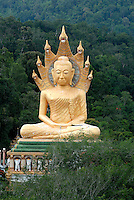 The giant image of Buddha sheltered by Naga's hood at Wat Rat Uppatham (Wat Bang Riang) near Phang Nga in Thailand. As the story goes, The Naga king Muchalinda spread out his seven-hood head to protect the Buddha while he was meditating during a strong rainstorm. The pedestal has three circles of Naga coiled in layers around the sitting Buddha..