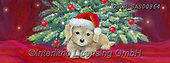 ,CHRISTMAS ANIMALS, WEIHNACHTEN TIERE, NAVIDAD ANIMALES, paintings+++++,USCRSAS00864,#xa#