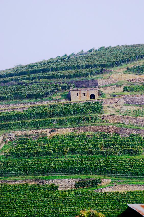vineyard vorburg grand cru rouffach alsace france