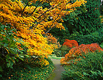 Kubota Garden, Seattle, WA<br /> A variety of Japanese Maples in brilliant fall colors border a secluded pathway in the garden