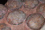Dinosaur egg nest, 70-100 million years old, Cretaceous Period, Henan Province, Xixia Basin, China