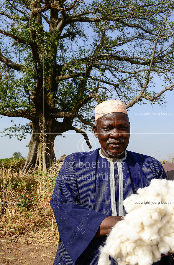 BURKINA FASO , Obiré, Gan kingdom, men harvest cotton by hand at farm of 29th. Gan king SA MAJESTÉ ROI GAN, behind cotton tree Kapok / Maenner ernten Baumwolle per Hand auf der Farm des Gan Koenig SA MAJESTÉ ROI GAN, im Hintergrund Kapok Baum