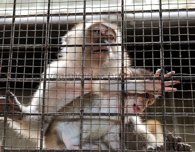 Primates_Borneo