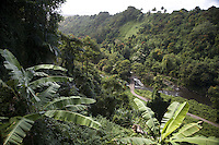Stream running through a Big Island valley with banana leaves in the foreground
