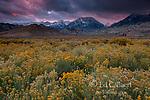 The Sierra Nevada