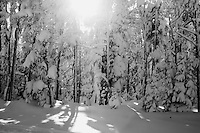 Trees stand above the snow at Showdown Ski Area on King's Hill in the Little Belt Mountains near Neihart, Montana, USA.