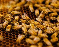 Beekeeper - Salado TX