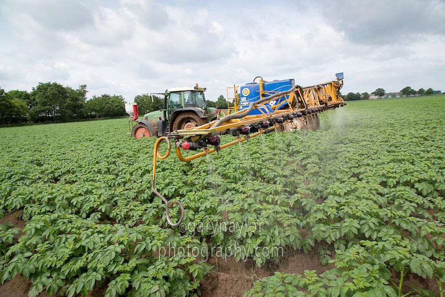 Applying blight spray to Desiree potatoes - Lincolnshire, June