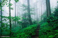 Appalachian Trail through foggy forest, Great Smoky Mountains National Park, Tennessee.