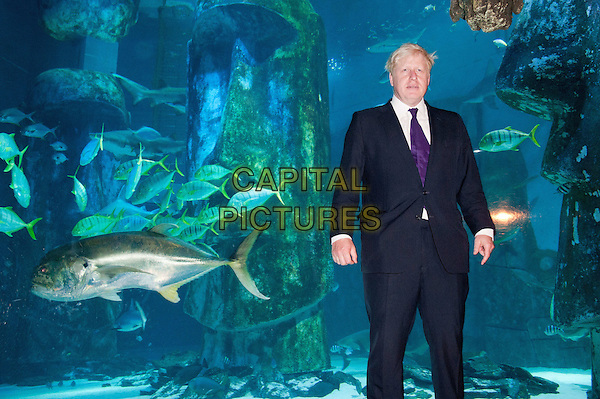 The Mayor of London Boris Johnson visits the London Aquarium's newest attraction, the shark tank, to promote the range of summer promotions available to Londoners and tourists alike, including 2 for 1 ticket offers and money off promotions. London Aquarium, London, England..August 17th, 2012.half length black white purple tie shirt suit water animals 3/4 full.CAP/BF.©Bob Fidgeon/Capital Pictures.