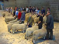 Lonk Show and Sale, Clitheroe, Lancashire...Copyright John Eveson 01995 61280..j.r.eveson@btinternet.com