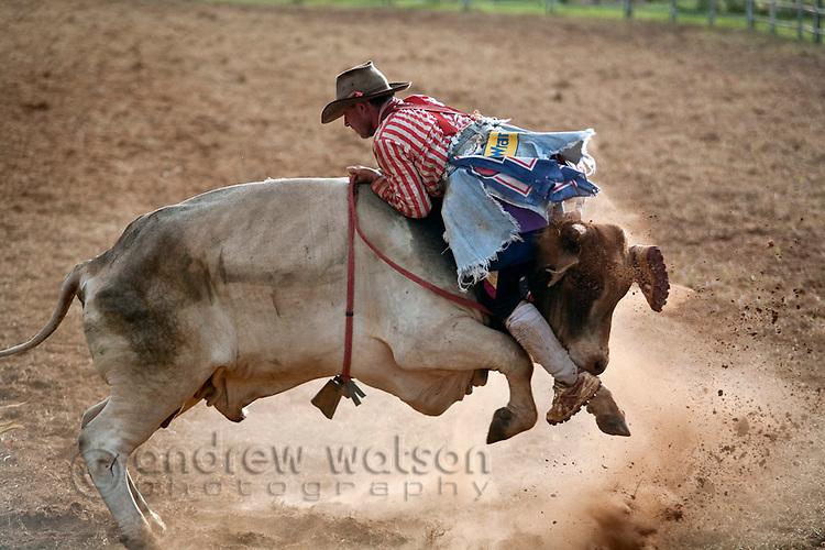 A rodeo clown takes a ride on a bull backwards.  Mt Garnet Rodeo, Mt Garnet, Queensland, Australia