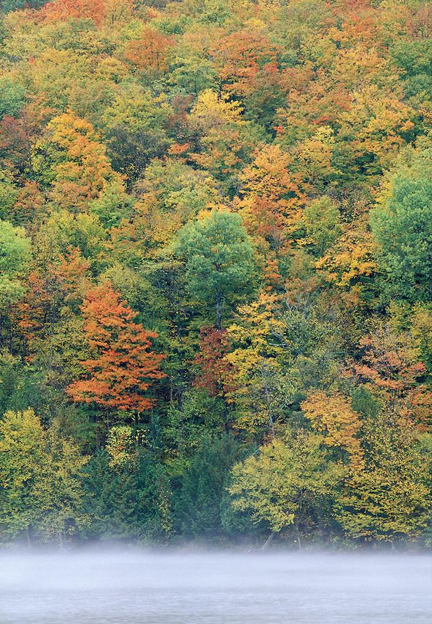 Autumn foliage and Lake Eligo, Vermont