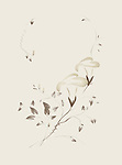 Two intricate Morning Glory flowers, artistic oriental Zen style design illustration based on an original artwork isolated on ivory, light beige background