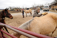 NWA Media/ J.T. Wampler - Jeremy Wachs brushes Sierra while Susan Sullivan leads Jack away, left, after she trimmed his hooves Tuesday Dec. 16, 2014 at Flying Q Farms. Wachs was preparing the horse for ridig. Hoof trimming needs to be done every six to eight weeks according to Sullivan.