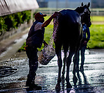 LOUISVILLE, KENTUCKY - APRIL 28: Scenes from the backside as horses prepare for the Kentucky Derby and Oaks at Churchill Downs in Louisville, Kentucky on April 28, 2019. Scott Serio/Eclipse Sportswire/CSM