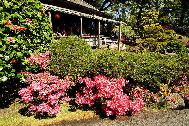 California, San Francisco: Spring flower colors at the Japanese Tea Garden in Golden Gate Park..Photo #: 24-casanf78804.Photo © Lee Foster 2008