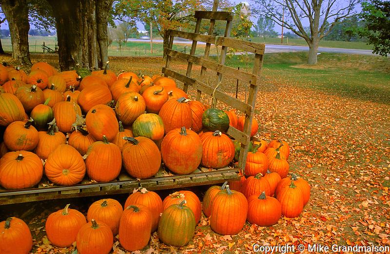 Pumpkins at harvest on old wagon in farm yard<br /> Pusclinch<br /> Ontario<br /> Canada