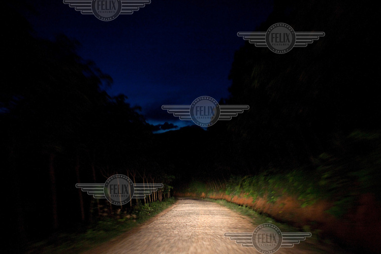 Lights from a vehicle illuminate a forest road near Mending, Yunnan Province, China.