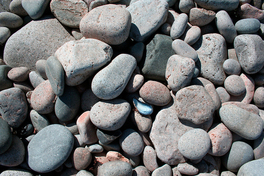 Seaside background of smooth rocks with mussel