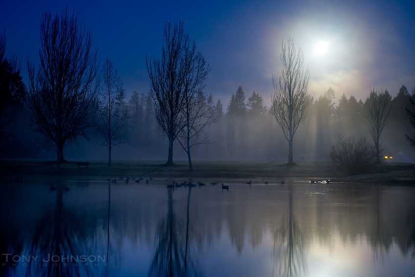 Fog begins to obscure the moon long before dawn