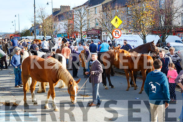 Sean Enright Castlemaine tends to his horse at a packed Main Street during the Castleisland Horse Fair on Wednesday