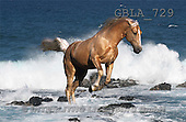 Bob, ANIMALS, collage, horses, photos(GBLA729,#A#) Pferde, caballos