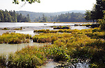 Afternoon sun on a marsh in southern New Hampshire USA