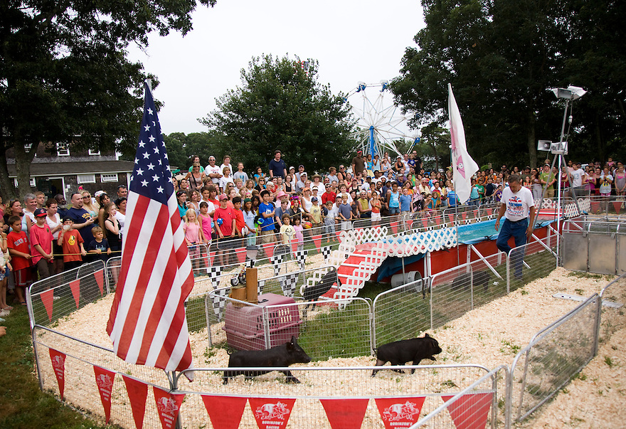 A pig race at the 147th Martha's Vineyard Agricultural Society Fair. The annual event brought traditional livestock contests, rides and more to island off Cape Cod in Massachusetts...