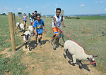 Mulugeta Kiflom (right), a 13-year old resettled refugee from Ethiopia, and Eldana Teclamariam, a 12-year old resettled refugee from Eritrea, lead a group of youth learning how to show sheep and goats in Linville, Virginia, on July 17, 2017. The youth are preparing to show their animals in a county fair. <br /> <br /> They and other refugees were resettled in the Harrisonburg, Virginia, area by Church World Service. <br /> <br /> Photo by Paul Jeffrey for Church World Service.
