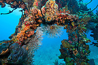 Wreck of The RMS Rhone.Salt Island.BVI
