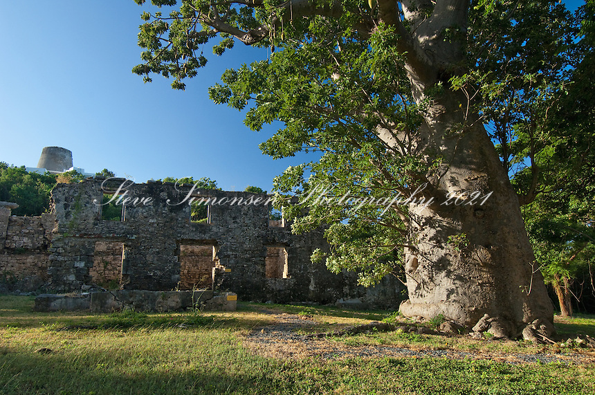 Baobob Tree and ruins<br /> Butler Bay St Croix USVI.