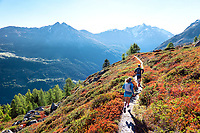 Running in a colorful fall landscape on perfect singletrack during the Via Valais, a multi-day trail running tour connecting Verbier with Zermatt, Switzerland.