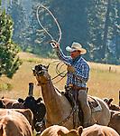 Cowboy Photography Workshop   Erickson Cattle Co...Tim Hansen .. Photo by Al Golub/Golub Photography