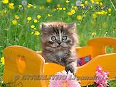 Marek, ANIMALS, REALISTISCHE TIERE, ANIMALES REALISTICOS, cats, photos+++++,PLMP2293,#a#