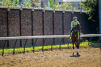 May 01, 2014: Samraat prepares for the Kentucky Derby at Churchill Downs in Louisville Ky. Alex Evers/ESW/CSM